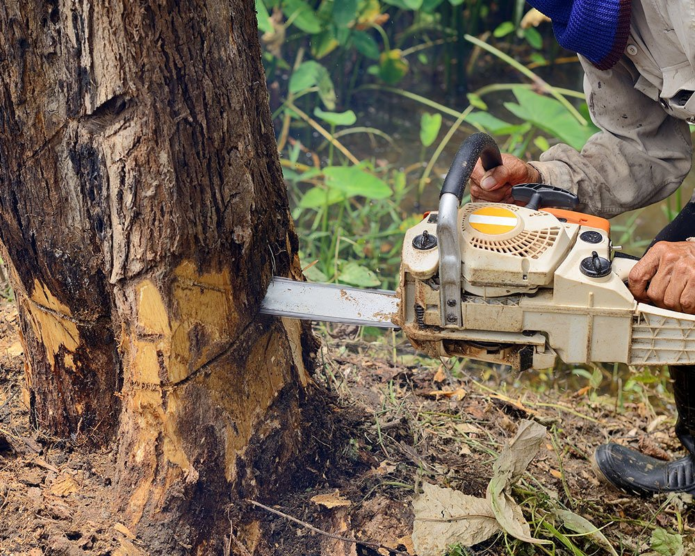 Tree Service Tallahassee - Tree Removal