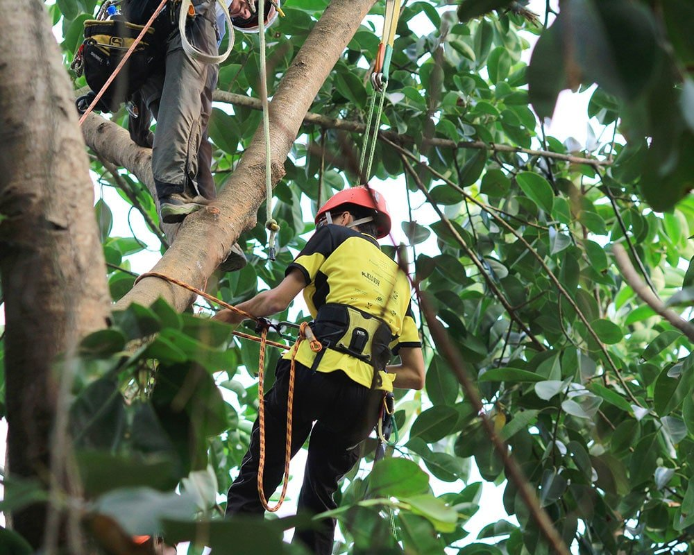 Tree Service Tallahassee - Emergency Tree Removal